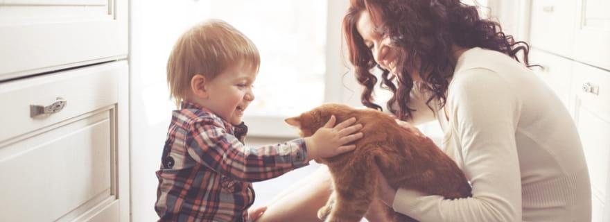 Estoy de alquiler y tengo mascota: ¿cómo me ayuda el seguro?