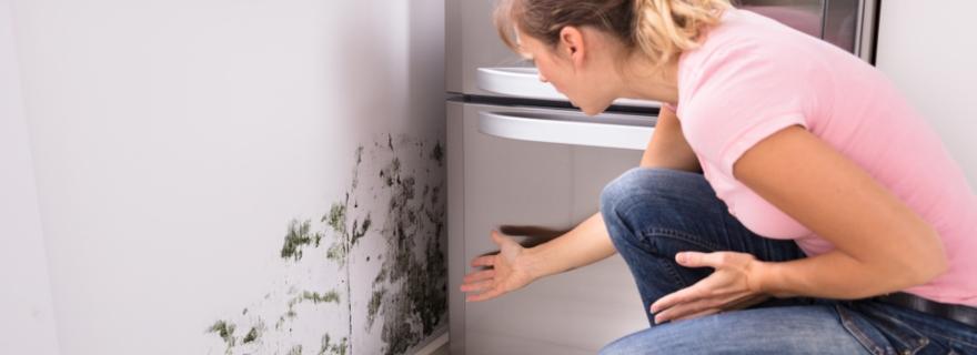 ¿Cubre el seguro de hogar las humedades del vecino